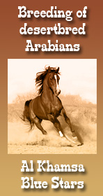 Breeding of desertbred arabians